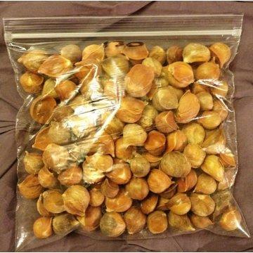50 Bulbos De Allium Sphaerocephalon Ajo Japonés