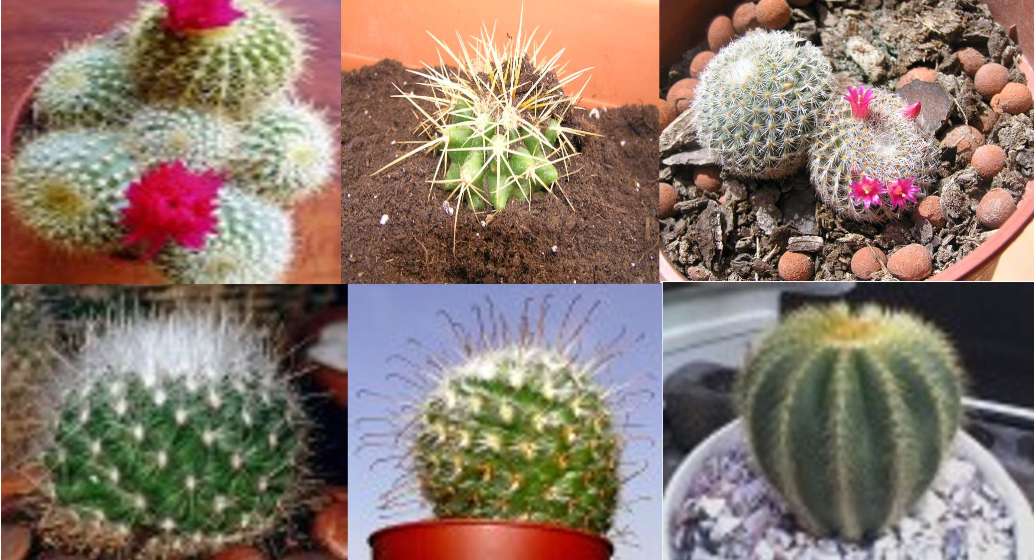 Diferentes tipos de arboles related keywords diferentes for Especies de cactus